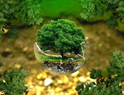 Día de la Tierra: ¿por qué es importante y qué puedes hacer tú?